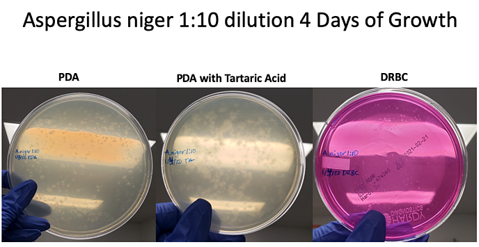 Aniger 1-10 dilution 4 days-1