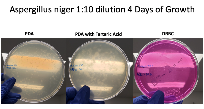 Aniger 1-10 dilution 4 days-2